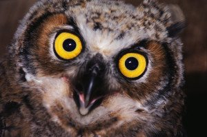 http://office.microsoft.com/en-us/images/results.aspx?qu=owls&ex=1&CTT=1#ai:MP900407217|