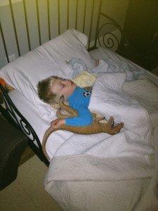 Snuggle Buddy T-Rexey