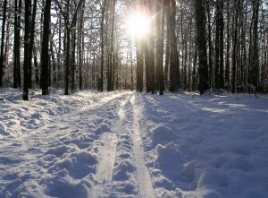 trails-to-the-sun-1251899-m
