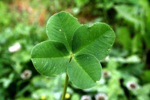 good-luck-1158905-m