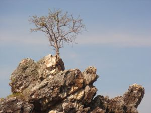 tree-on-rock-1149769-m