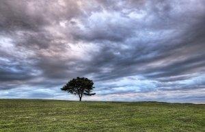 lone-tree-1-1427207-m
